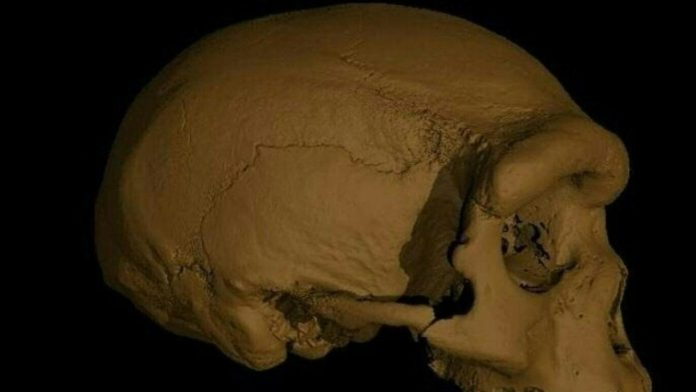 A new species of prehistoric man is closer to us than Neanderthals