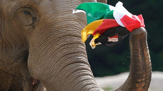 EM - Germany vs. Hungary: Elephant Oracle Predicts a Balance