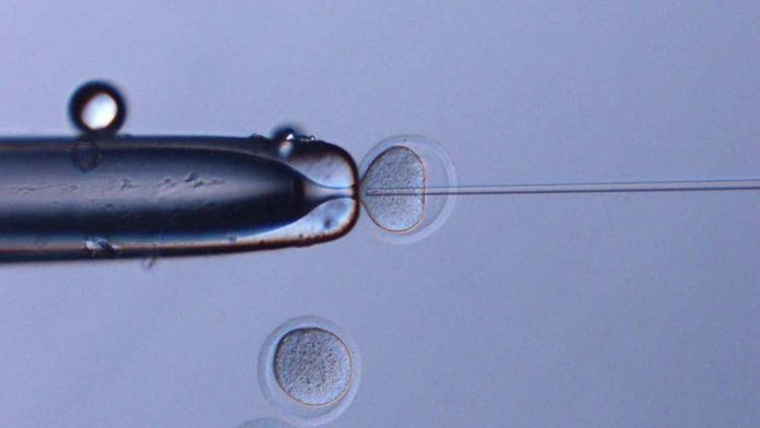 They achieve healthy mice with sperm stored in space