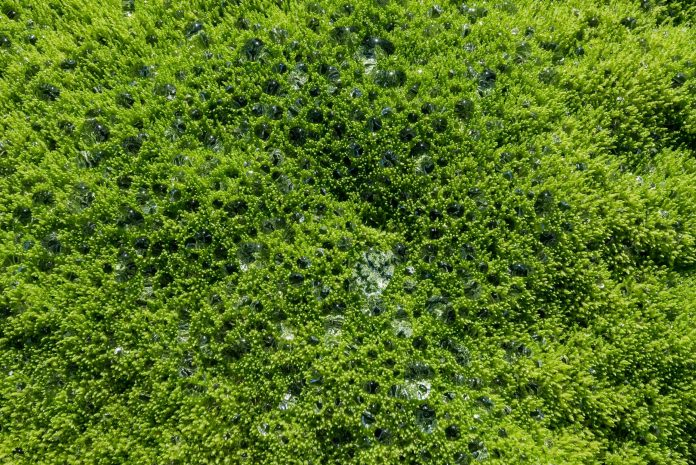 The arrival of terrestrial plants 400 million years ago changed the Earth's climate control system