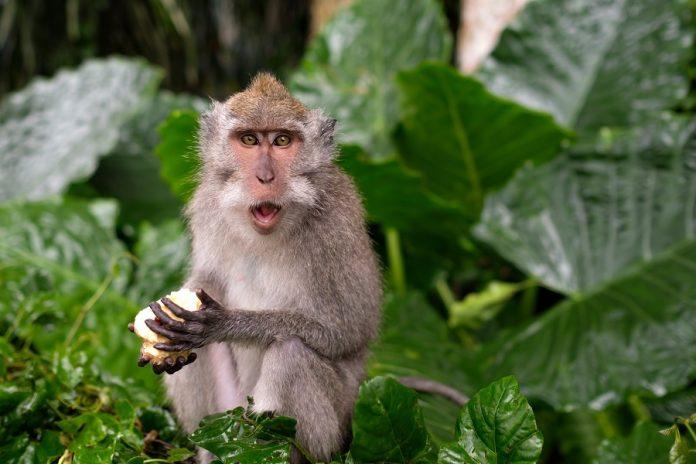 World's first 3D image of monkey brain developed