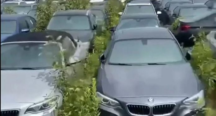 Canada: Over 3,000 all-new BMWs abandoned and rot in the open air in Vancouver |  Video |  EC Stories |  Globalism