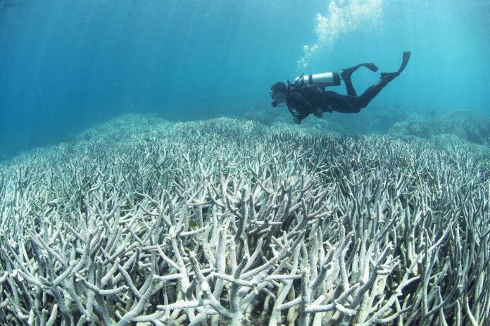 14% of the world's coral reefs disappeared between 2009 and 2018