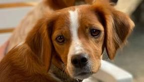 A hunter blindly shoots and kills another hunter's dog, deploring