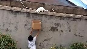 A young boy rescues and adopts a cat by handing him a cardboard box