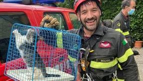 Gato ends up at the bottom of a well, some citizens sound an alarm and firefighters rescue him